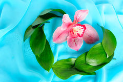 Aún-vida con una orquídea Imagen de archivo libre de regalías