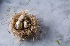 Aún-vida conceptual con los huevos de codornices en jerarquía del heno sobre fondo gris, cierre para arriba, foco selectivo Foto de archivo libre de regalías