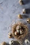 Aún-vida conceptual con los huevos de codornices en jerarquía del heno sobre fondo gris, cierre para arriba, foco selectivo Foto de archivo