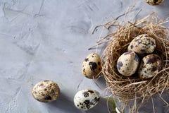 Aún-vida conceptual con los huevos de codornices en jerarquía del heno sobre fondo gris, cierre para arriba, foco selectivo Fotos de archivo