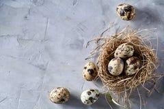Aún-vida conceptual con los huevos de codornices en jerarquía del heno sobre fondo gris, cierre para arriba, foco selectivo Fotos de archivo libres de regalías