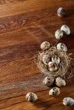 Aún-vida conceptual con los huevos de codornices en jerarquía del heno sobre fondo de madera oscuro, cierre para arriba, foco sel Imágenes de archivo libres de regalías