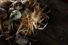 Aún-vida conceptual con los huevos de codornices en jerarquía del heno sobre fondo de madera oscuro, cierre para arriba, foco sel Fotos de archivo libres de regalías
