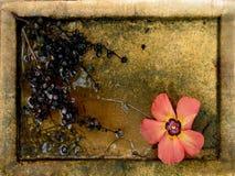 Aún-vida de la caída Foto de archivo libre de regalías