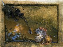 Aún-vida de la caída Imagen de archivo libre de regalías