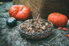 Aún-vida de la cosecha fresca Imagenes de archivo