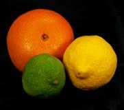 Aún-vida de la fruta cítrica Imágenes de archivo libres de regalías