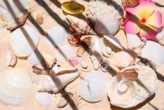 Aún-vida de la playa Imágenes de archivo libres de regalías