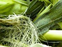Aún-vida de la seda del maíz Imagenes de archivo