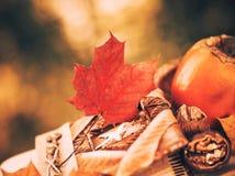 Aún-vida de la temporada de otoño Imagen de archivo libre de regalías