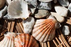 Aún-vida de las cáscaras y de los guijarros del mar Foto de archivo libre de regalías