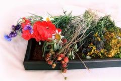 Aún-vida de las flores y de las bayas de la fresa salvaje Fotos de archivo libres de regalías