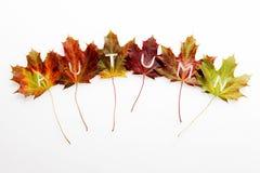 Aún-vida de las hojas de otoño con el texto Foto de archivo libre de regalías
