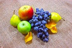 aún-vida de las uvas, tela áspera del otoño Imagen de archivo