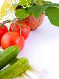 Aún-vida de un tomate, de un pepino, y de las cebollas w Imagen de archivo libre de regalías