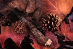 Aún-vida del bosque Foto de archivo libre de regalías