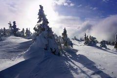 Aún-vida del invierno Fotos de archivo