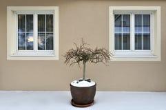 Aún-vida del invierno Imagen de archivo libre de regalías