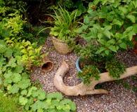 Aún-vida del jardín Imagen de archivo