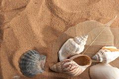 Aún-vida del mar Fotografía de archivo libre de regalías