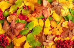 Aún-vida del otoño Foto de archivo