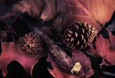 Aún-vida del otoño. Foto de archivo
