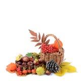 Aún-vida del otoño - castañas y una ceniza de montaña Foto de archivo libre de regalías