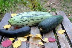 Aún-vida del otoño con el calabacín maduro Fotografía de archivo libre de regalías