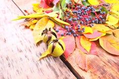 Aún-vida del otoño con la uva, las hojas y más salvajes Imagenes de archivo