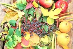 Aún-vida del otoño con la uva, las manzanas y más salvajes Imágenes de archivo libres de regalías