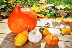 Aún-vida del otoño con las calabazas en jardín iluminado por el sol Imágenes de archivo libres de regalías