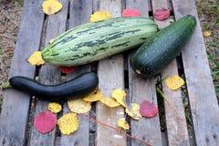 Aún-vida del otoño con las verduras maduras al aire libre Foto de archivo