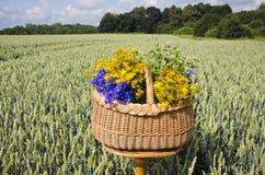 Aún-vida del pleno verano con la cesta y las hierbas médicas en campo de trigo Imagen de archivo libre de regalías