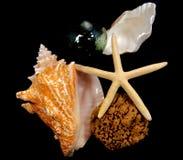 Aún-Vida del shell del mar Fotografía de archivo libre de regalías