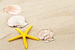Aún-vida del verano. Foto de archivo libre de regalías