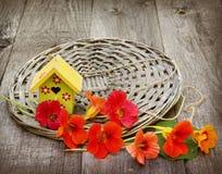 Aún-vida del verano con las flores de la capuchina y de la estrella decorativa Foto de archivo