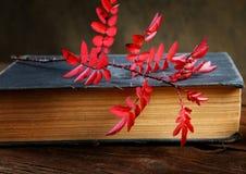 Aún-vida el libro y una rama del dogrose Foto de archivo