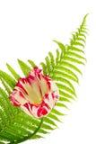 Aún-vida floral Fotografía de archivo