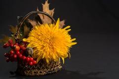 Aún vida floral con el girasol en colores del otoño en backgr oscuro Imágenes de archivo libres de regalías