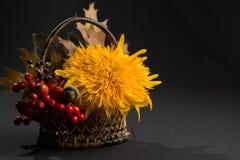Aún vida floral con el girasol en colores del otoño en backgr oscuro Foto de archivo libre de regalías