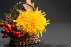 Aún vida floral con el girasol en colores del otoño en backgr oscuro Imagen de archivo libre de regalías