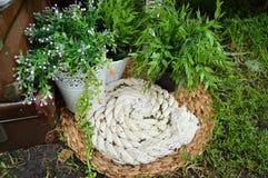Aún vida hermosa en el jardín Cuerda del yute, estera, plantas en el pote Fotos de archivo libres de regalías