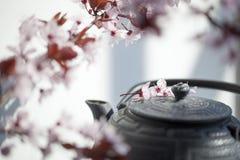 Aún-vida hermosa para los amantes del té y de naturaleza Foto de archivo libre de regalías