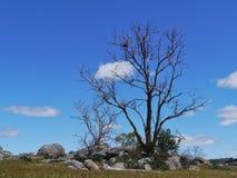 Aún vida natural australiana Imagen de archivo