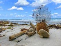 Aún vida oceánica natural con la esponja Fotos de archivo