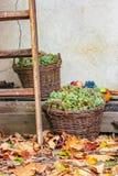Aún vida otoñal con la fruta y las hojas Imagenes de archivo