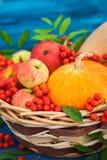 Aún vida otoñal con las calabazas, las manzanas y la sorba Imagenes de archivo