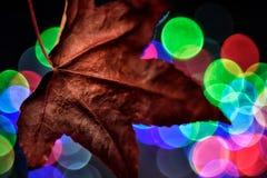 Aún vida preciosa, colores de la naturaleza Fotos de archivo libres de regalías