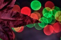 Aún vida preciosa, colores de la naturaleza Imagenes de archivo