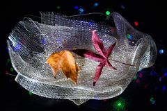 Aún vida preciosa, colores de la naturaleza Fotografía de archivo